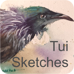 Amanda Brett, artist, tui sketches for sale